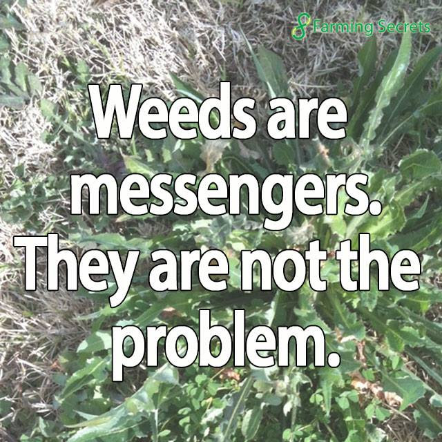 Weeds are messengers