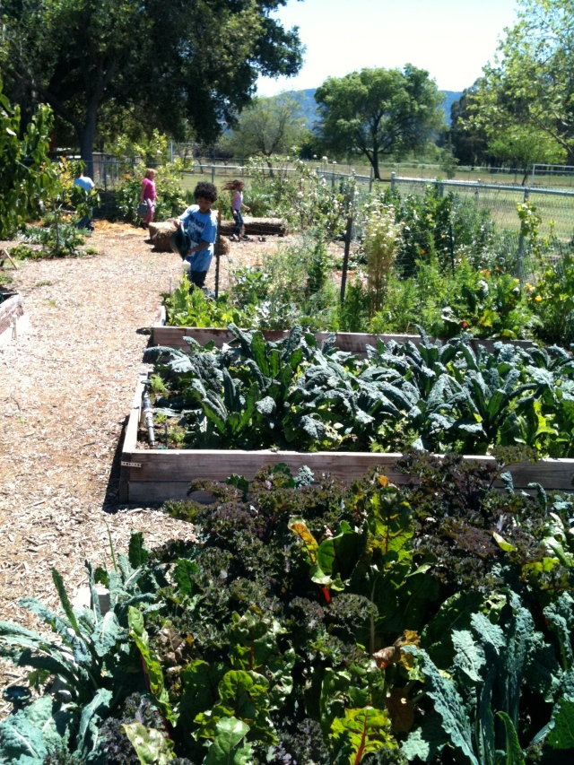 Meiners Oaks Elementary School Garden