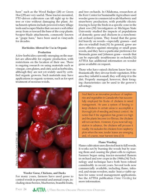 ATTRA Organic Fruit Production report_Page_24