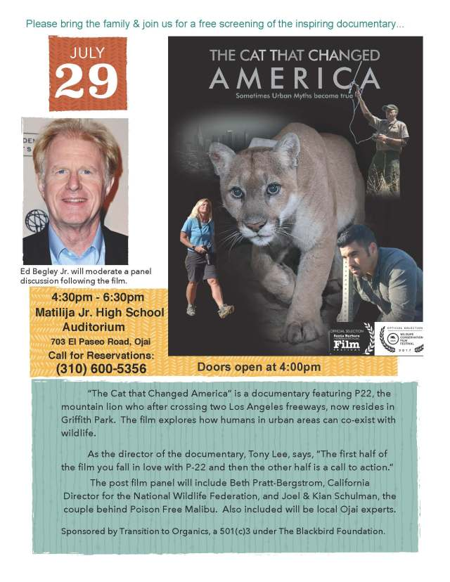 The Cat flyer p5
